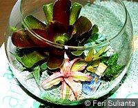 Terarium Seni Taman dalam Kaca